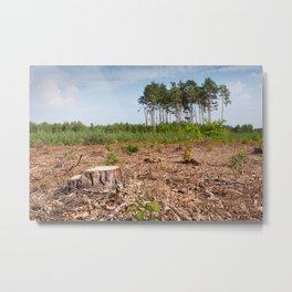 Woods logging one stump after deforestation Metal Print