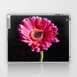 Single Pink Flower on Black Background Laptop & iPad Skin
