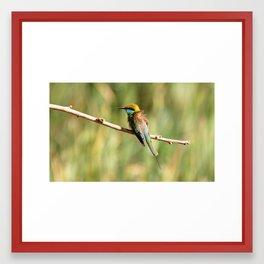 Little Green Bee-eater Framed Art Print