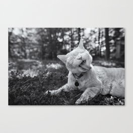 Cheeto the Cat Canvas Print