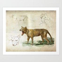 The Scientific Sketchbook: Thylacine Art Print