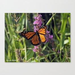 Monarch Splendor Canvas Print