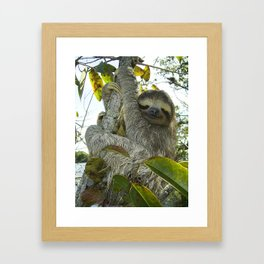 Smiling Sloth Framed Art Print