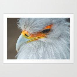 Feathers and eyelashes Art Print