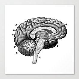 Brain 2 Canvas Print