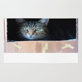 Cat In The Box Rug