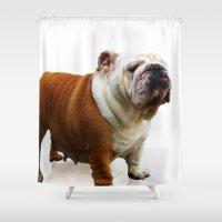bulldog Shower Curtains featuring Bulldog by Artistically Home