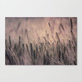 Barley-Pink Canvas Print