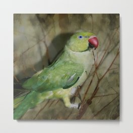Indian Ringneck Parrot - Cherokee Metal Print