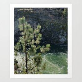 Sunny River Canyon With Churning Water and Pine Tree Art Print