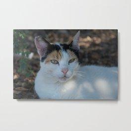 Cat Dubrovnik Metal Print