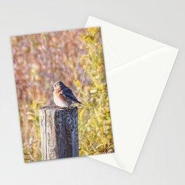 Bluebird in the Autumn Sun Stationery Cards
