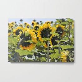 Sunflower Vol.6 Metal Print
