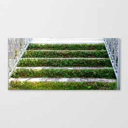 Grassy Stairs Canvas Print