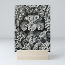 Ernst Haeckel Vintage Sea Coral Print Mini Art Print