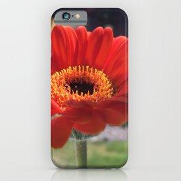 Orange Gerber Daisy iPhone Case