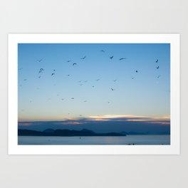Birds Croatie Lokrum Art Print