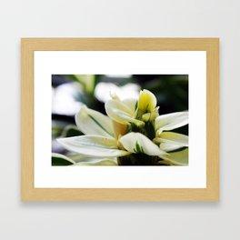 Blooming White Framed Art Print