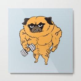 Buff Pug Metal Print