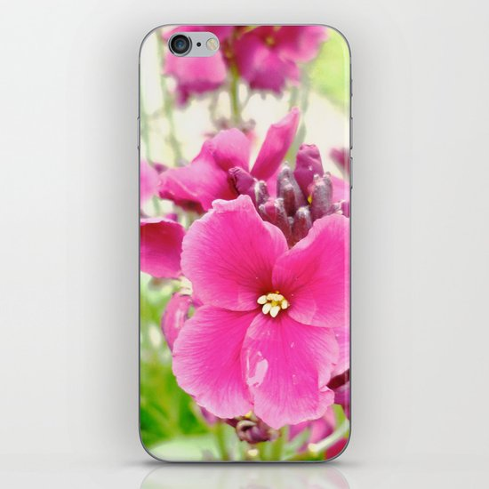 Chartwell iPhone & iPod Skin