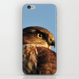 Young Cooper's Hawk iPhone Skin