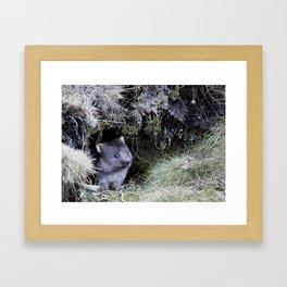 Wombat Joey Framed Art Print