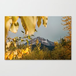Mt. Hood Through The Leaves Canvas Print