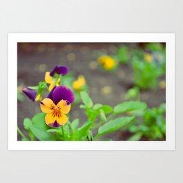 Purple Flowers in Early Spring Art Print