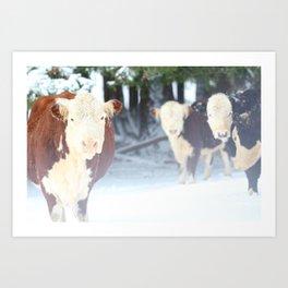 Snow Cows Art Print