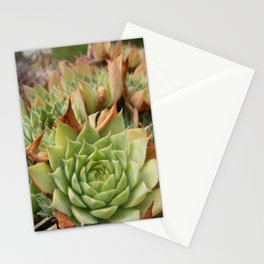 Hens and Chicks Plant Stationery Cards