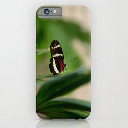 Doris Longwing Butterfly-1 iPhone Case
