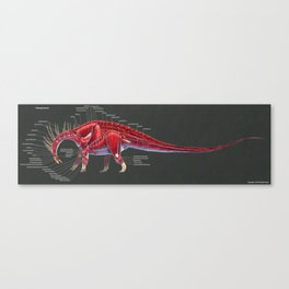 Amargasaurus Muscle Study Canvas Print