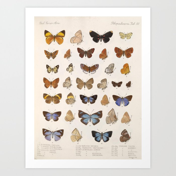 Vintage Scientific Insect Butterfly Moth Biological Hand Drawn Species Art Illustration Kunstdrucke