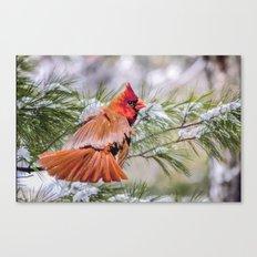 Christmas Cardinal. Canvas Print