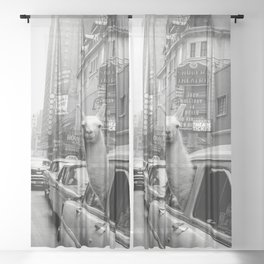 Llama Riding in Taxi, Black and White Vintage Print Sheer Curtain