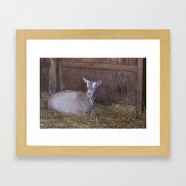 Toggenburg Goat Framed Art Print