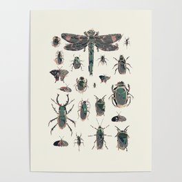 Collection of Insects Poster