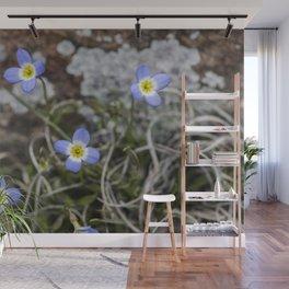 May Bluets Wall Mural