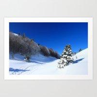 Winter Pine Art Print