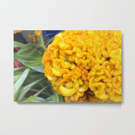 Celosia Tropical Flower Metal Print