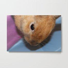 Fluffy Bunny 2 Metal Print