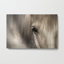 Horse look Metal Print