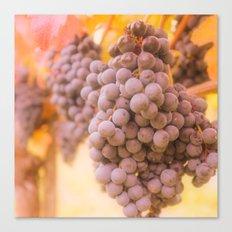 From Tuscany vineyard Canvas Print