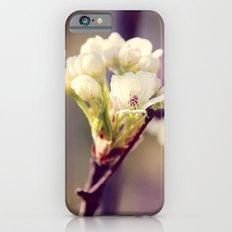 Pear Tree Blooming iPhone 6s Slim Case