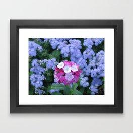 pic 029 Framed Art Print