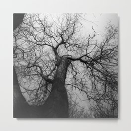 Tree   Landscape Photography   Abstract   Haze   Canopy   Branches   Fog Metal Print