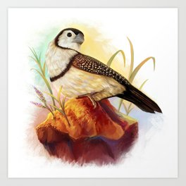 Owl finches realistic painting Art Print