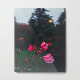 Romantic Roses Metal Print