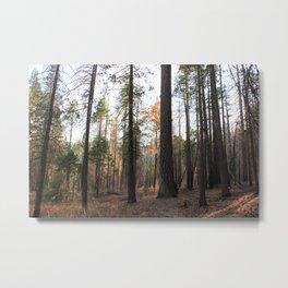 TREEEEES Metal Print