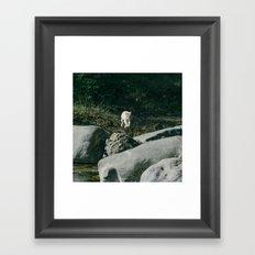 FLYING CAT Framed Art Print